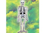 2 Haunted Halloween 44cm Jointed Spooky Skeleton Cutouts Hanging Decorations